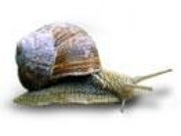 Ікра молюсків
