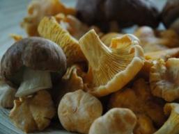 Як приготувати грибну ікру