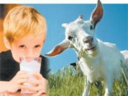 Козяче молоко