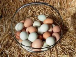 Яйця цесарок