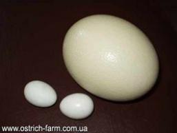 Яйця страусині